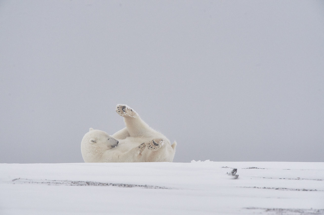 Alaska2013_D4S8725
