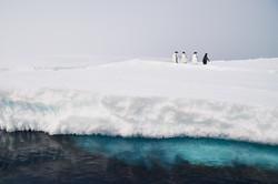 Antarctica2017_day11_D5S2818