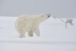 Alaska2013_D4S9104