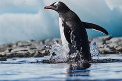 Antarctica2017_day6_D855143