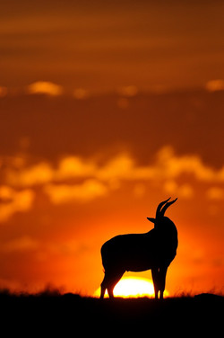 Kenya10_D307340