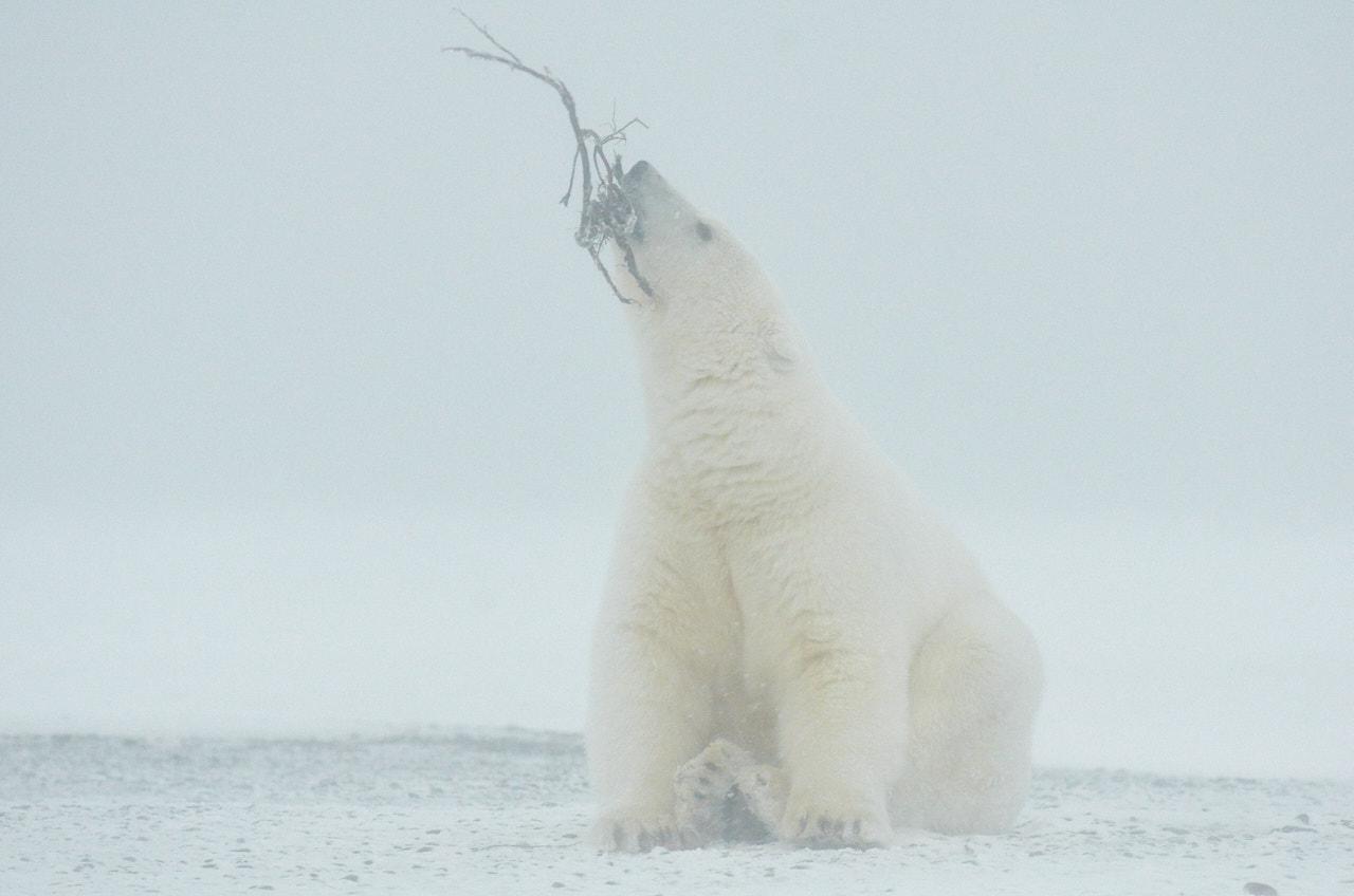 Alaska2013_D7M6480
