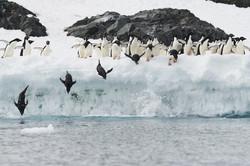 Antarctica2017_day10_D853491