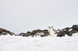 Antarctica2017_day12_D5S3615