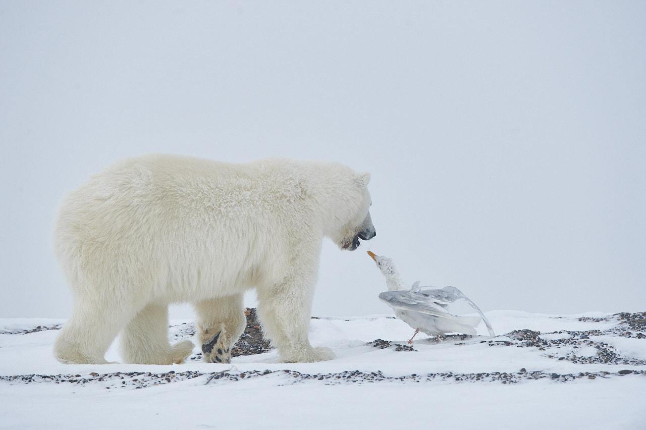 Alaska2013_D4S9600