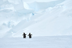 Antarctica2017_day6_D853961