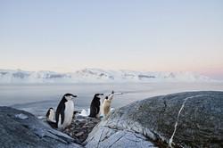 Antarctica2017_day5_D5S0044