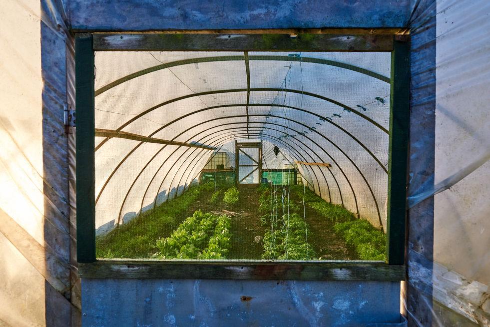 Moy Hill Organic Farm & Home Tree - West Ireland