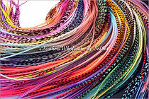 Wholesale Feather Extensions Hair Feathers Bulk