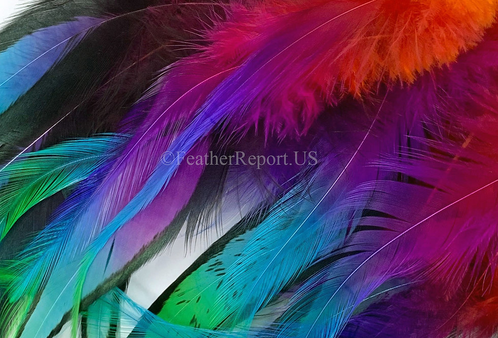 Bright Rainbow Feathers for Crafts Magenta Orange Blue Green Chicken Feathers 20