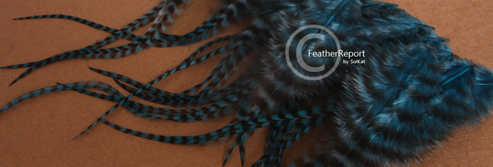 Teal Colored Grizzly Feathers for Crafts