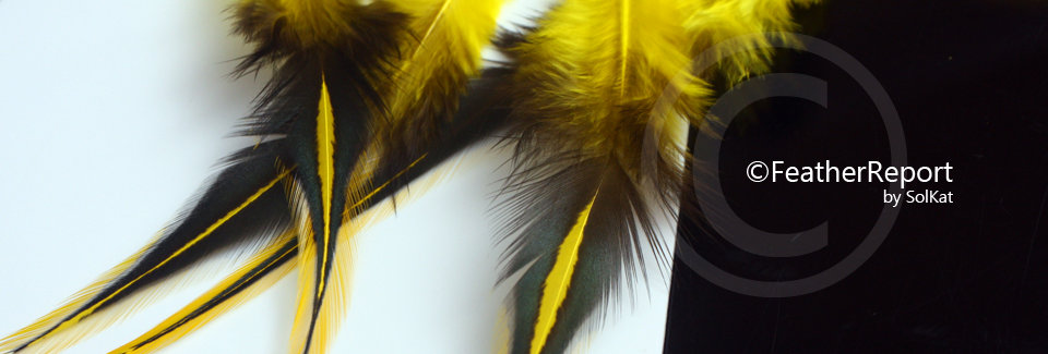Yellow Laced Rooster Saddle Feathers for Crafts 12PCS