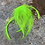 Thumbnail: Kelly Green Craft Feathers Coq Rooster Cape Feathers FL Green Neon Green 12PC