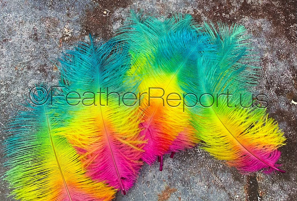 1 Rainbow Ostrich Feather Small a la carte Dreamcatchers Smudge Craft Feathers