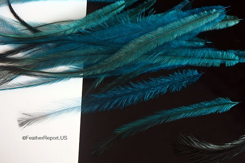 Hair feathers craft feathers handmade jewelry feather long turquoise emu feather hair extensions 5 pmusecretfo Images
