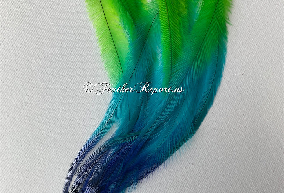 Lime Blue Emu Craft Feathers Naturally Molted Rainbow Plumes Pack of 12
