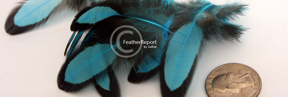 Turquoise Craft Feathers Laced Black Small 12PCS