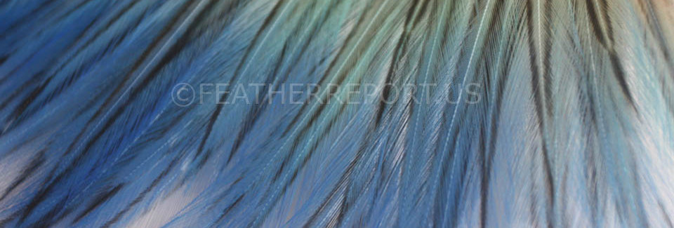 20PCS Ocean Blue Aqua Ombre Craft Feathers Laced Dyed