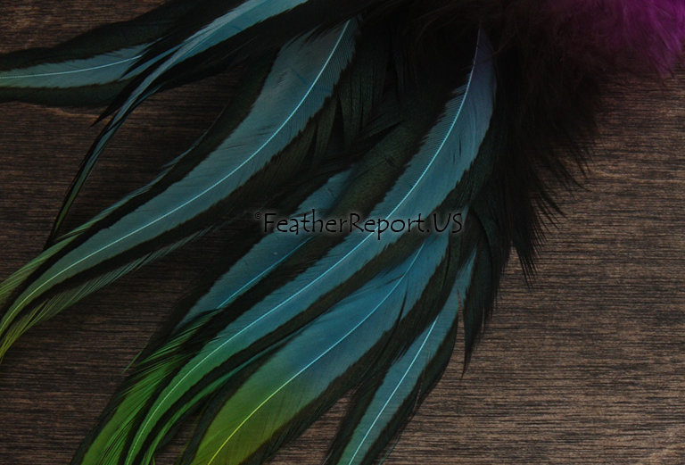 Laced Rooster Saddle Rooster Craft Feathers Frozen Blue Green Magenta 8Pack 7-8""