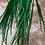 Thumbnail: Bulk Emerald Green Grizzly Rooster Feather Hair Extensions 30