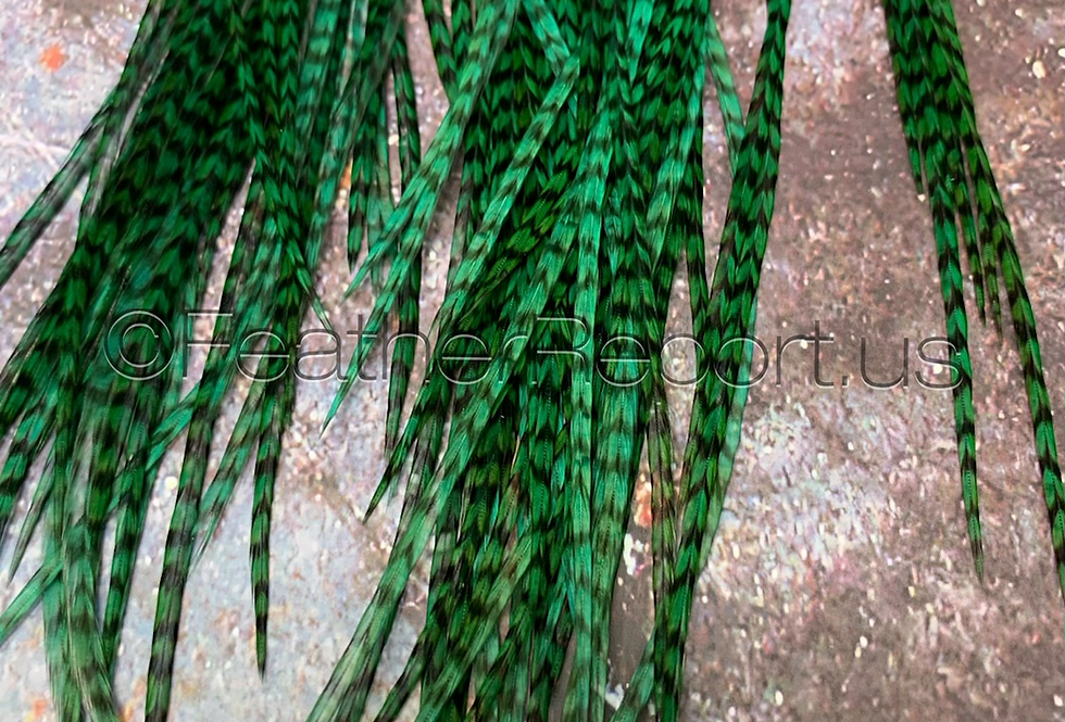 Bulk Emerald Green Grizzly Rooster Feather Hair Extensions 30