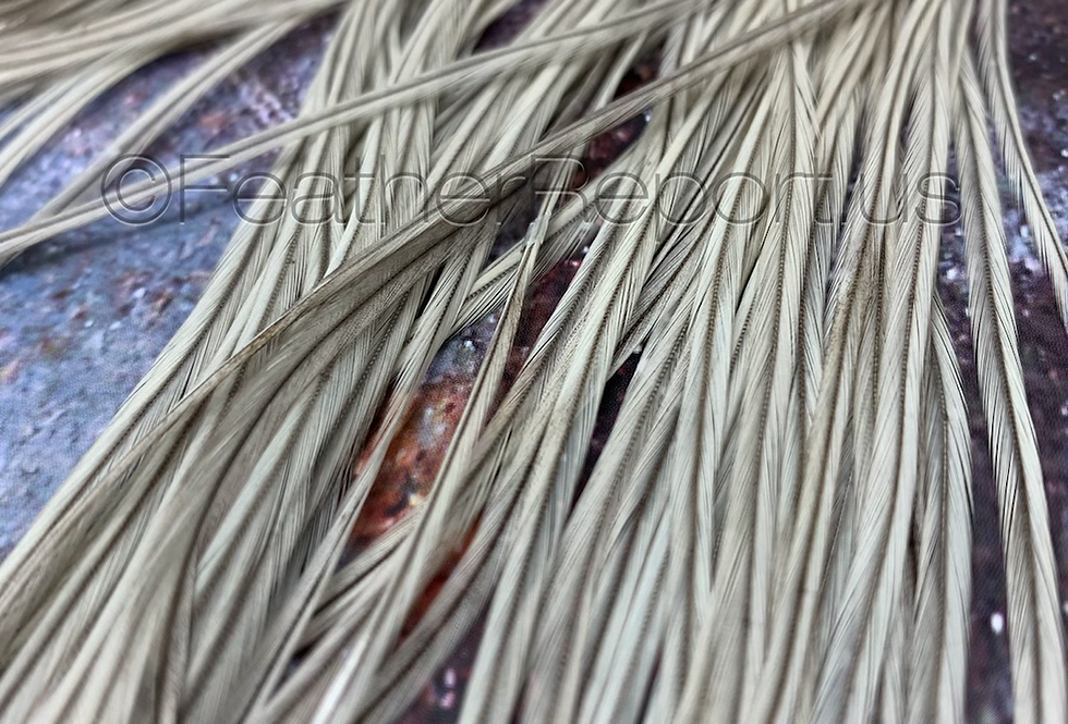 20 Light Grey Hair Feathers Long Slender Gray Feather Extension Solids