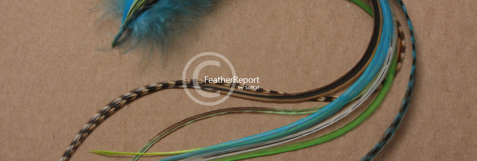 Thick & Thin Turquoise Lime Feather Extension