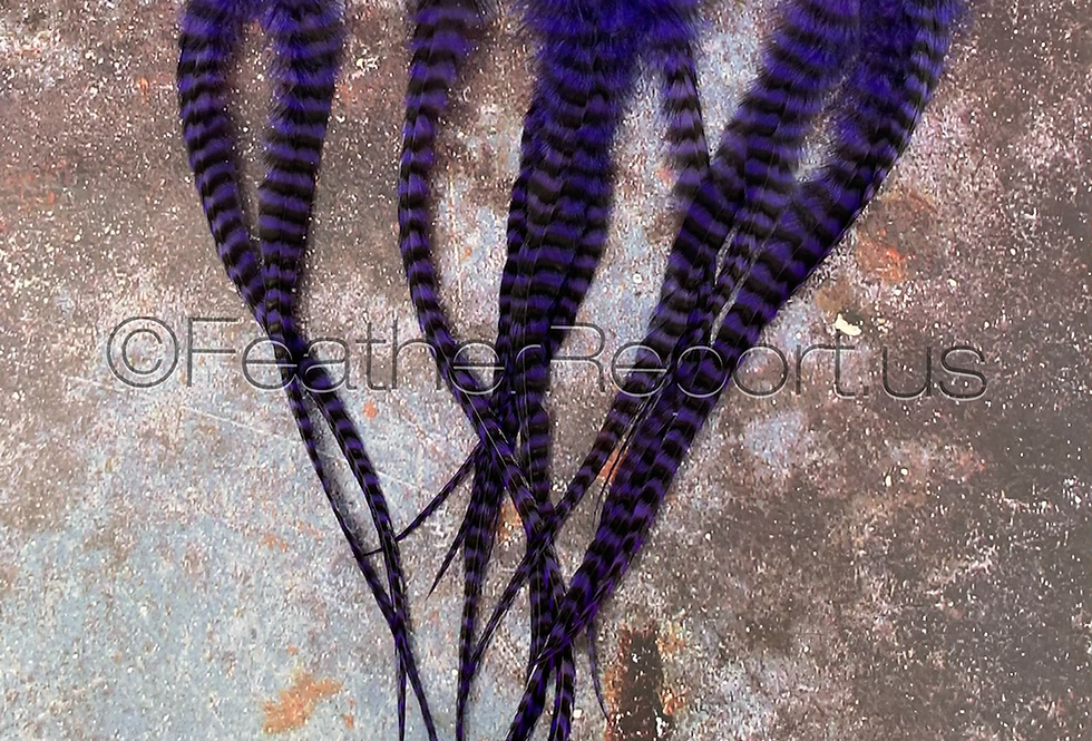 12 Extra long Violet Purple Grizzly Rooster Saddle Feathers for craft