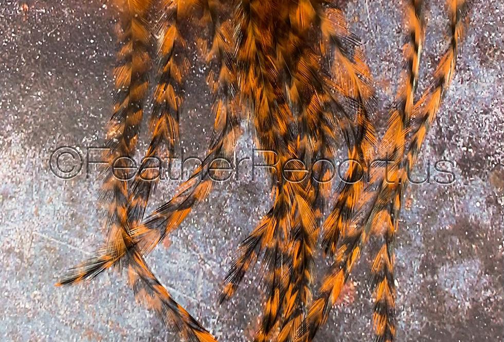 Blazing Orange Rooster Craft Feathers Coq de Leon Saddle 12pcs
