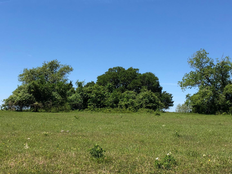 3H Ranch Texas Beef Ranch.JPEG