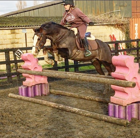 Balance training for Kate 🚀 #jumping #showjumping #jumptraining #equestrian #horses #ridertraining