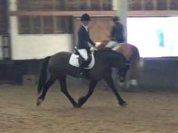 Rider trotting on horse