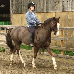 Since we are waiting for saddler to re-fit Jack with new saddle to match his new, fit body it seems