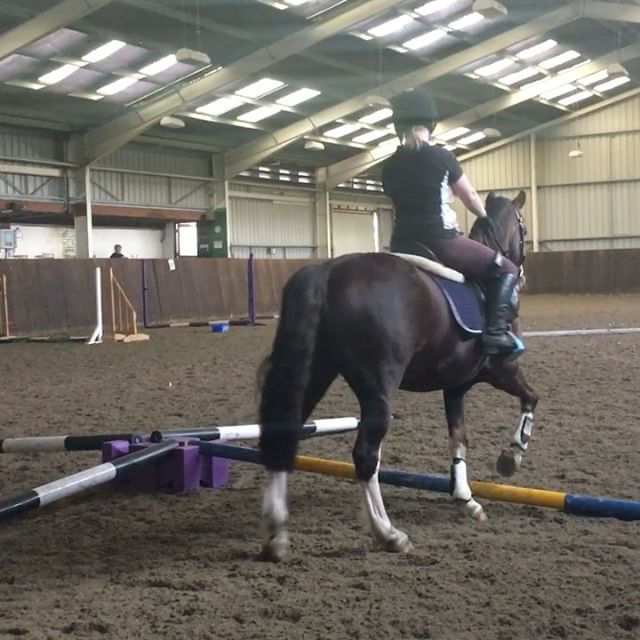 Kate and Jack - warm up before gridwork. Simple proprioception exercise