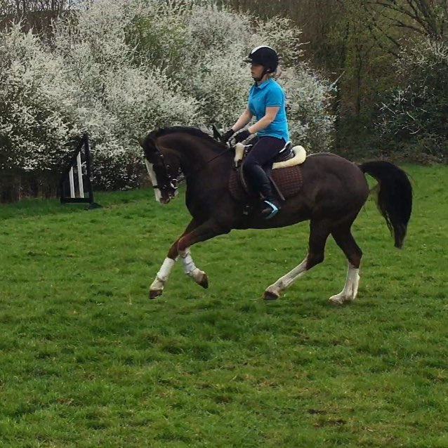 Jack is very excited about spring! #welshpony #adrenalineoverload