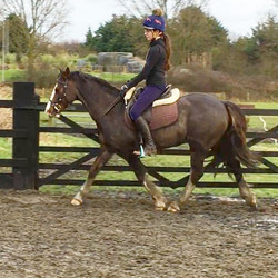 Trot work. Mia and Kate's Jack. Learning the timings for seat aids with neck strap instead of reins.