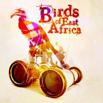 BirdsofEastAfrica