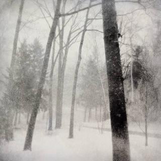 WINTER (2553)