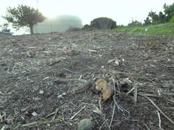 Habitat Destruction 12.12
