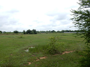 wetland before.JPG