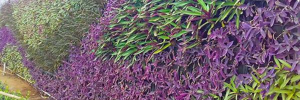 india green wall