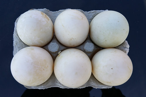 1/2 DZ Free Range Duck Eggs