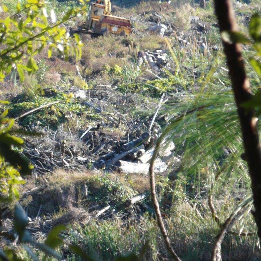 Landfill behind home