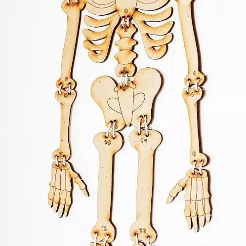 Rompecabezas Para Armar Esqueleto De Madera Didáctico De 1 M