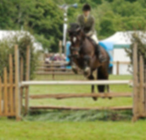 Hoys whp NFS._6th place. Charlie is improving all the time and took on the bigger course well. .jpg