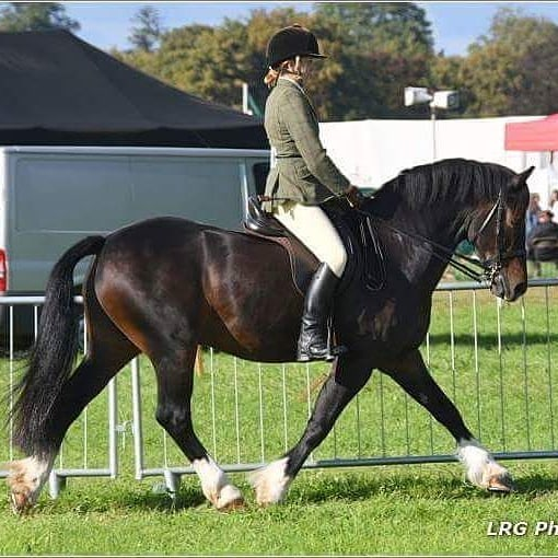Photo from Romsey County! _Who's ready for the Spring shows to begin_ _#welsh #welshd #dressage #whp