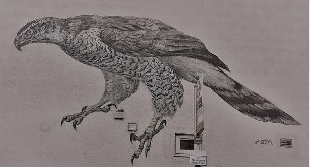 BigBird.png