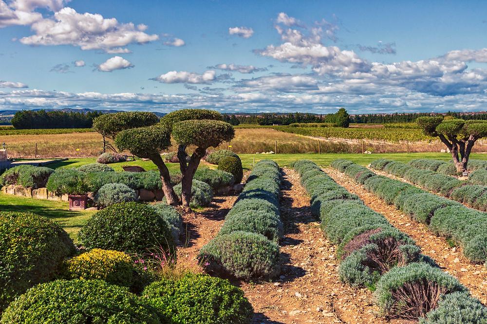 The garden at Entre Vigne et Garrigue