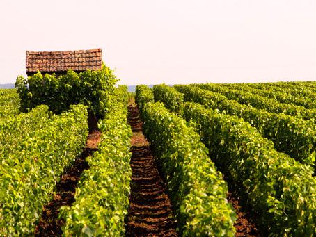 Barrel Tasting the Grand Crus of Burgundy