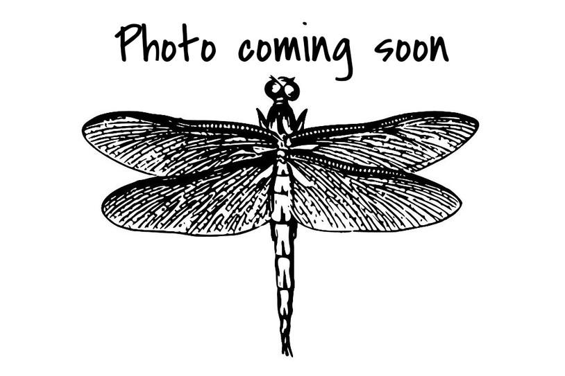 斑藍小蜻 Blue-tipped Percher